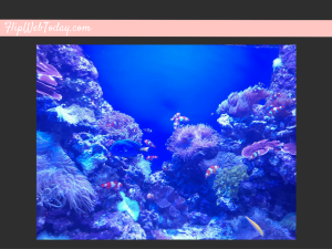 sea-aquarium-6